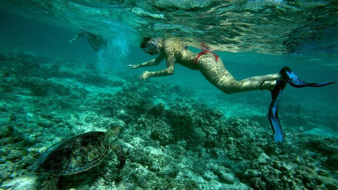 L'archipel des Seychelles est un lieu de nidification important de la tortue verte.