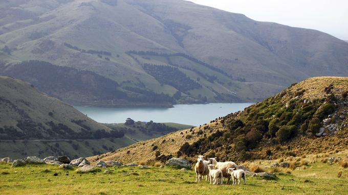 Un paysage de l'Ile du Sud, en Nouvelle Zélande. © Daniil Nasonov