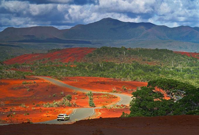 Au sud de Nouméa, les terres de latérite rubicondes, gorgées d'oxyde de fer, de chrome et de nickel, laissent croître la végétation très particulière des maquis miniers.