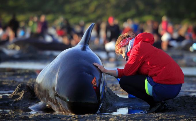 Une touriste allemande, Lea Stubbe, se porte à la rescousse d'une des baleines échouées sur la plage.