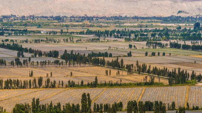 L'un des lieux les plus secs de la planète se fait soudainement verdoyant dans la fertile et agricole vallée du fleuve Majes.