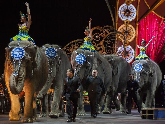 Les éléphants entrent dans l'arène du cirque Ringling Bros. and Barnum & Bailey, à Washington le 19 mars 2015 / AFP PHOTO / Andrew Caballero-Reynolds