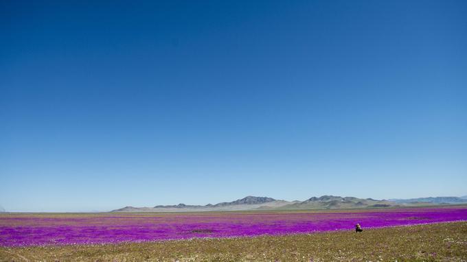 Les responsables du tourisme ont déclaré qu'ils espéraient que de nouvelles espèces fleuriront dans les prochaines semaines.