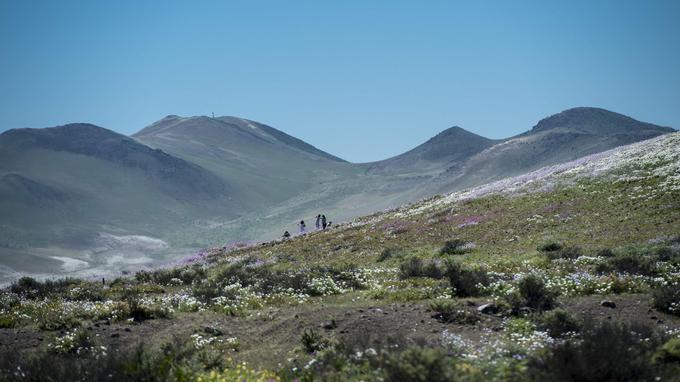 Le désert d'Atacama est cité comme étant le plus aride au monde, avec des précipitations quasi inexistantes durant l'année.