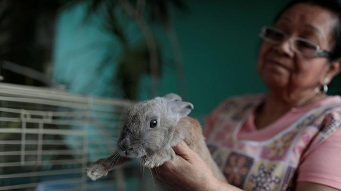 Maria Galindo et son lapin de compagnie, Lola, à Caracas.