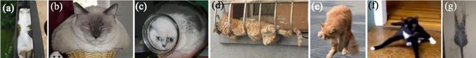 Exemples de chats dans divers supports, dans la publication parue dans «Rheology Bulletin», en juillet 2014.
