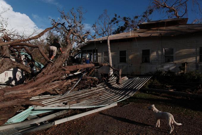 Un enfant grimpe sur un tronc d'arbre tombé lors du passage de l'ouragan Maria à Salinas, à Puerto RIco.