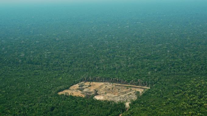 La forêt amazonienne, au Brésil, a subi en certains endroits l'une des plus importantes déforestations de son histoire cette année, avec des chiffres parfois trois fois plus élevés qu'en 2016.
