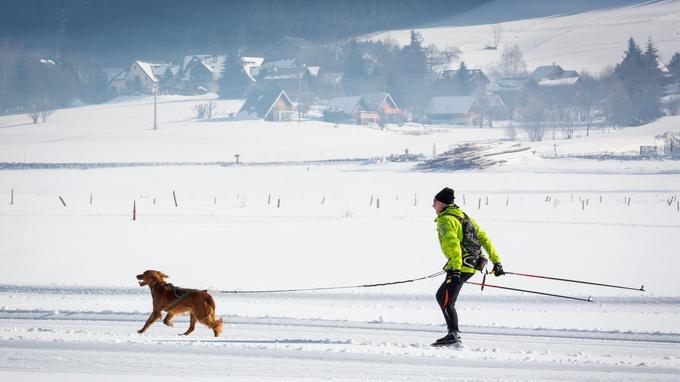 Ski attelé dans la plaine d'Autrans-Méaudre.