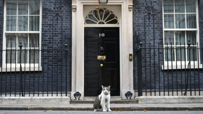 Larry devant le 10 Downing street.