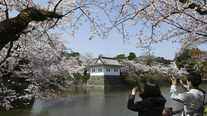 Un couple photographie les cerisiers en fleurs devant le château d'Odawara, dans le sud-ouest de Tokyo.