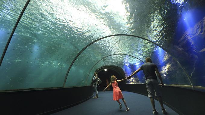 Véritable prouesse technique: le tunnel sous-marin de Nausicaa.