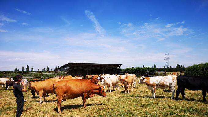 Une partie de l'élevage d'Éric Sanceau à la ferme de la Petite Hogue, près d'Auffargis.