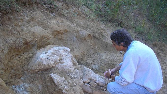 C'est en faisant des travaux sur l'un de ses terrains près de l'Isle-en-Dodon, en 2014, qu'un agriculteur a trouvé ces os