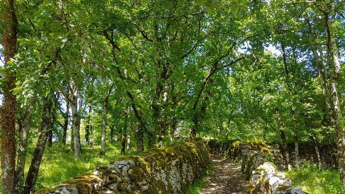 Des chemins entourés de murets comme celui qui conduit ici aux ruines de Taillefer.