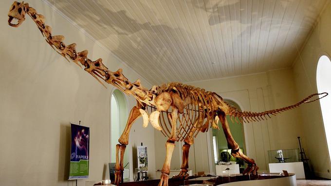 Le squelette de Maxakalisaurus.