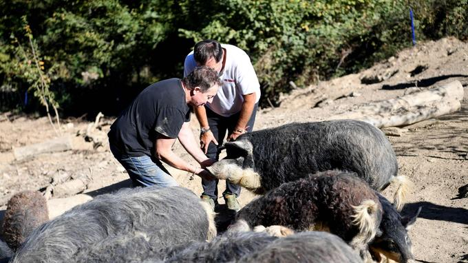 L'éleveur de porcs Michel Guidet et Bruno Bluntzer, patron de la maison de charcuterie lyonnaise Sibilia.
