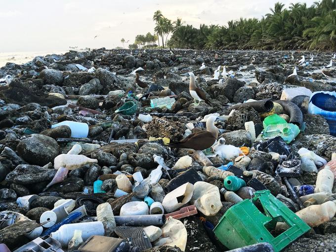 Une vision désespérante. Ne pourrait-on pas nettoyer une fois par an cette île, demande Serge Planes, le directeur scientifique de l'expédition Tara Pacific.
