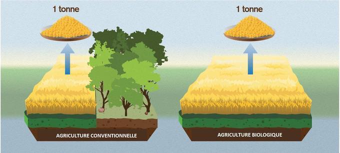 Les cultures biologiques prennent plus d'espace pour un rendement égal.