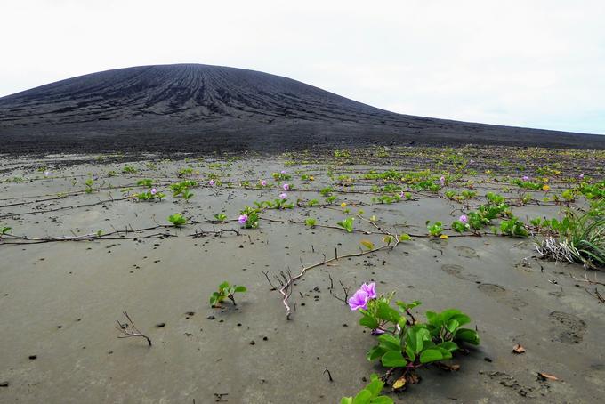 Dan Slayback a constaté que l'île était déjà colonisée par des plantes, en l'occurrence des patates à Surand, très communes dans les régions tropicales.