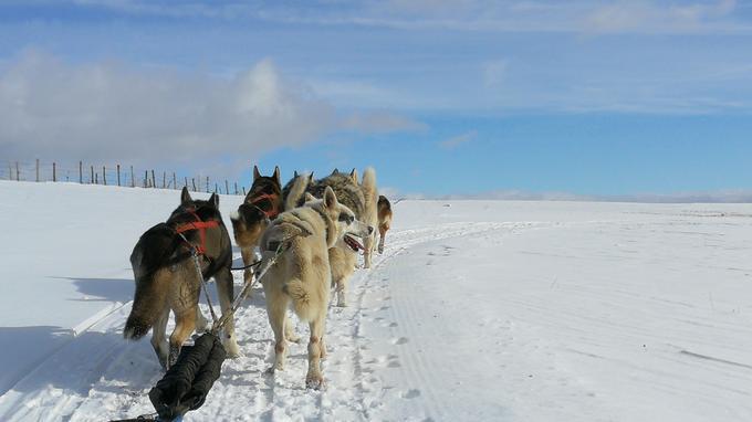 Balade en traîneau à chiens dans l'hiver cantalien.