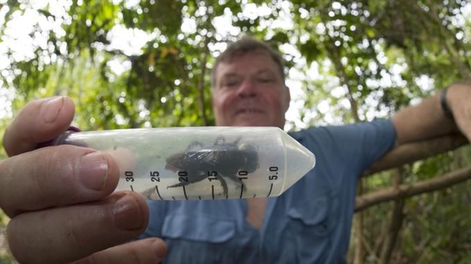 Simon Robson pose avec l'abeille géante de Wallace retrouvée en Indonésie.