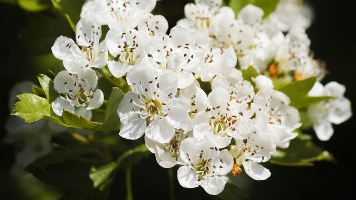 Acheter Griffonia Simplicifolia - dépression généralisée : Du diagnostic au traitement - Doctinews