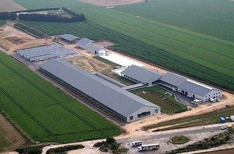 Production laitière. Coup d\'arrêt définitif pour la « ferme des 1 000 vaches » dans la Somme