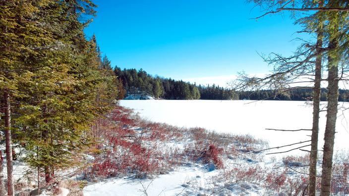 Le Québec en motoneige : l'appel de la forêt