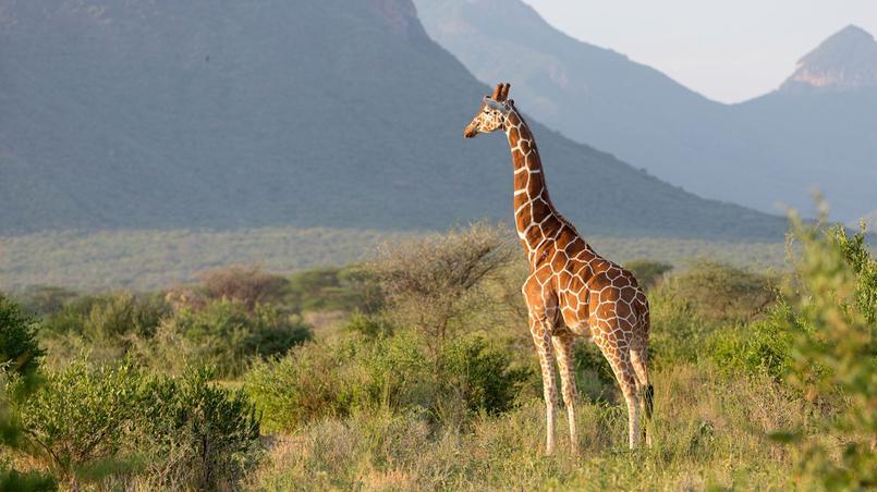 Site de rencontre kenya