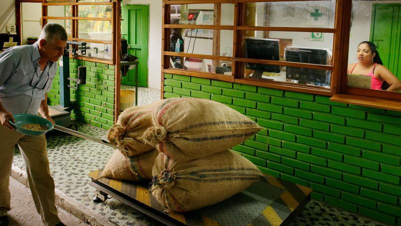 850 fermes apportent leurs sacs de café à la coopérative des caféiculteurs de Genova qui sélectionne les meilleurs.Triés selon des critères de qualité internationaux.