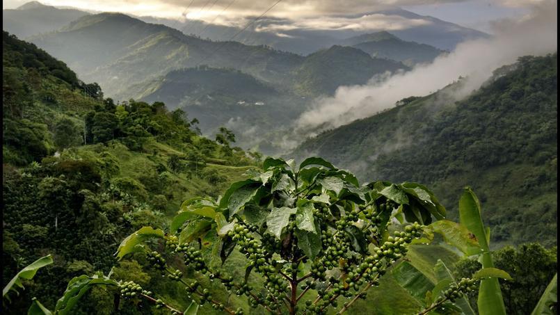 La vallée Del Cauca dans le département du Quindo offre une symphonie de vert aux pentes vertigineuses à peine voilées de quelques traînée de brume, qui s'étire à l'infini. Le spectacle est saisissant.