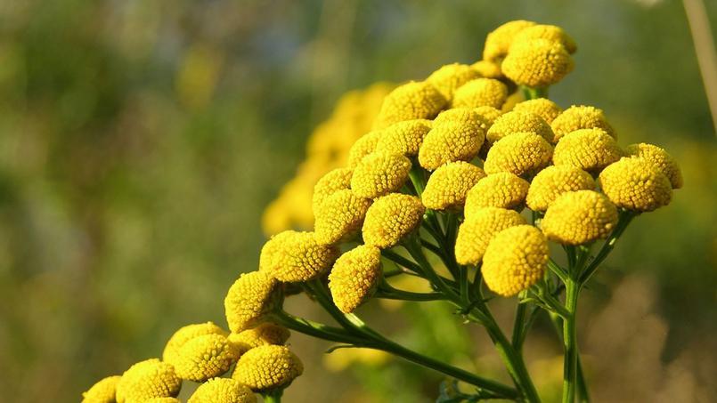 Teintures v g tales onze plantes annoncent la couleur - Plante a fleur jaune 6 lettres ...