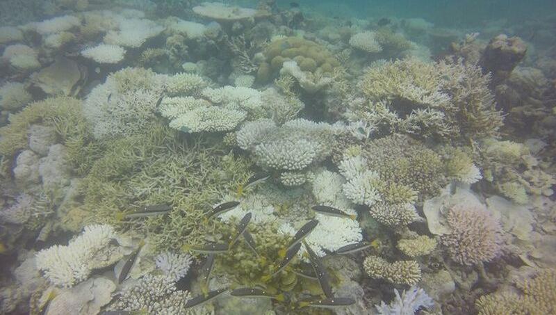 les coraux des maldives en danger en raison du changement climatique. Black Bedroom Furniture Sets. Home Design Ideas