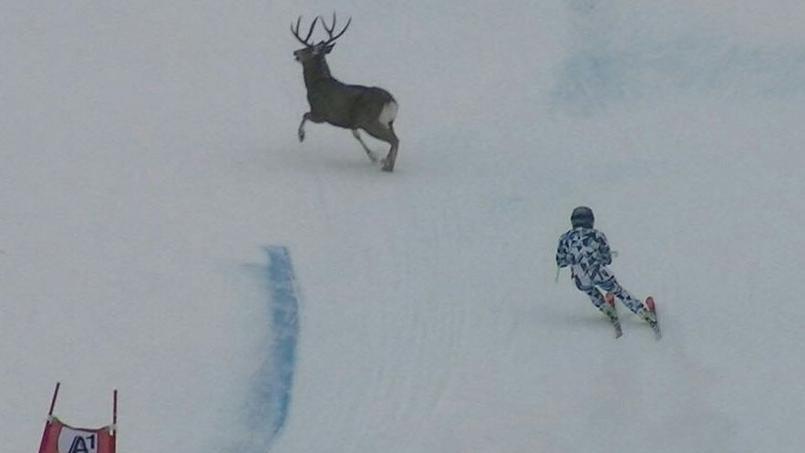 Une skieuse à deux doigts de percuter un cerf à pleine vitesse