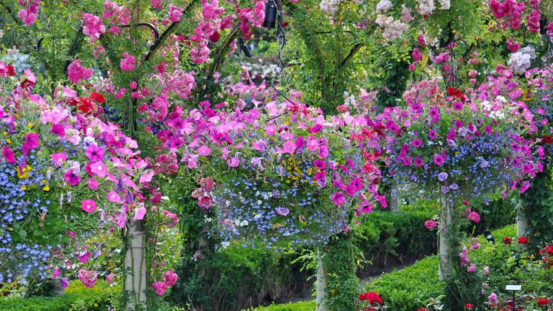 fleurs de balcon plein soleil latest spcial arrosage comment bien arroser pots et jardinires. Black Bedroom Furniture Sets. Home Design Ideas