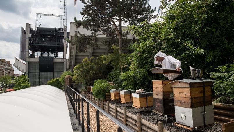 Les ruches du stade de Roland-Garros ont produit 366 pots ces derniers mois.