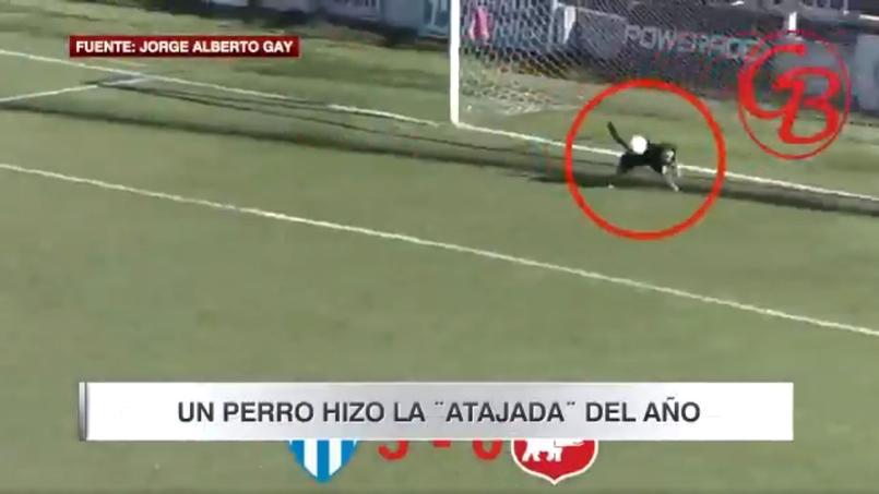 L'arrêt décisif du chien en faveur de Belgrano de Villa Ramallo.