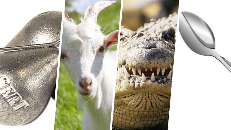 Plomb, crocodile, chèvre, cuillère... Connaissez-vous le jargon du tennis?