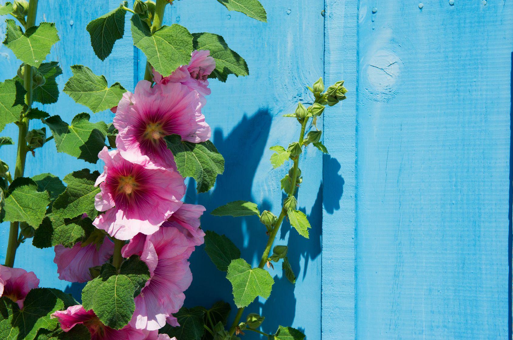 Rose Tremiere Un Parfum De Plage