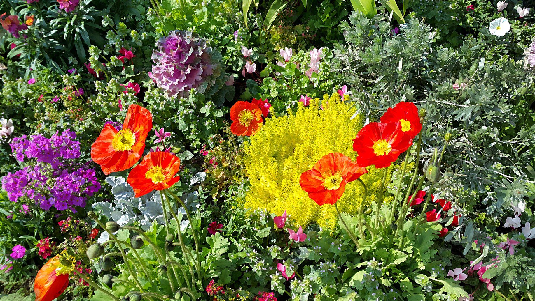 Comment créer des massifs fleuris et colorés pour pas cher?