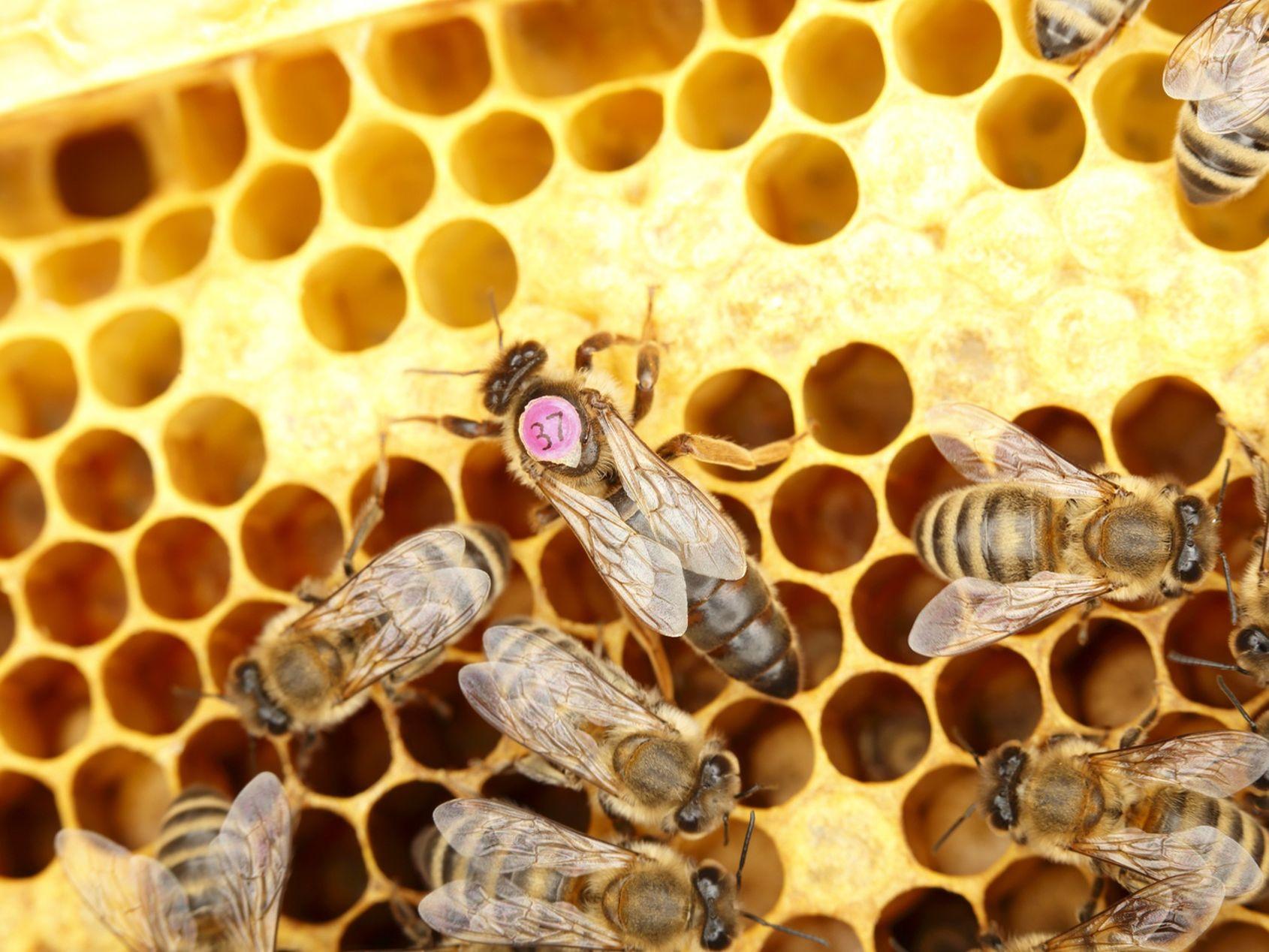 jinstalle une ruche dans mon jardin je recolte mon miel je protege les abeilles