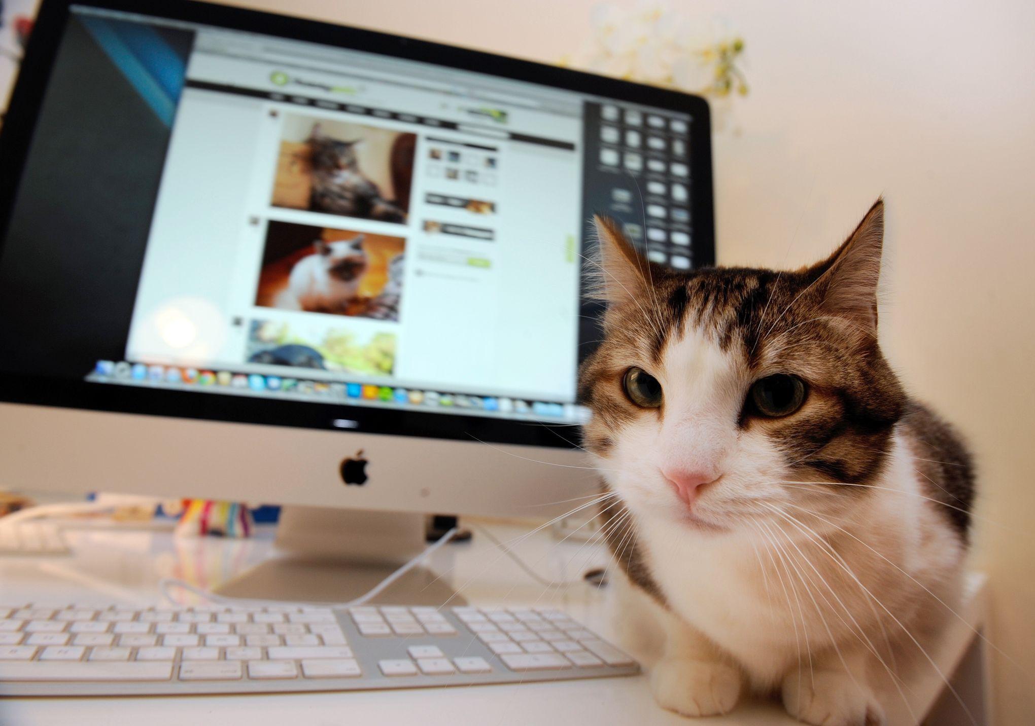 Vendre Un Chat Ou Un Chien Sur Internet Va Devenir Plus