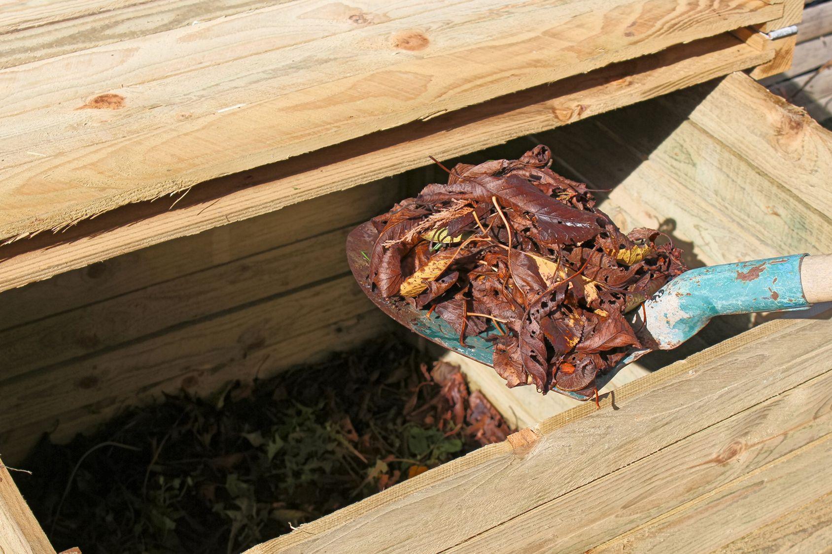 Compost De Feuilles D Érable feuilles mortes: n'en jetez plus !