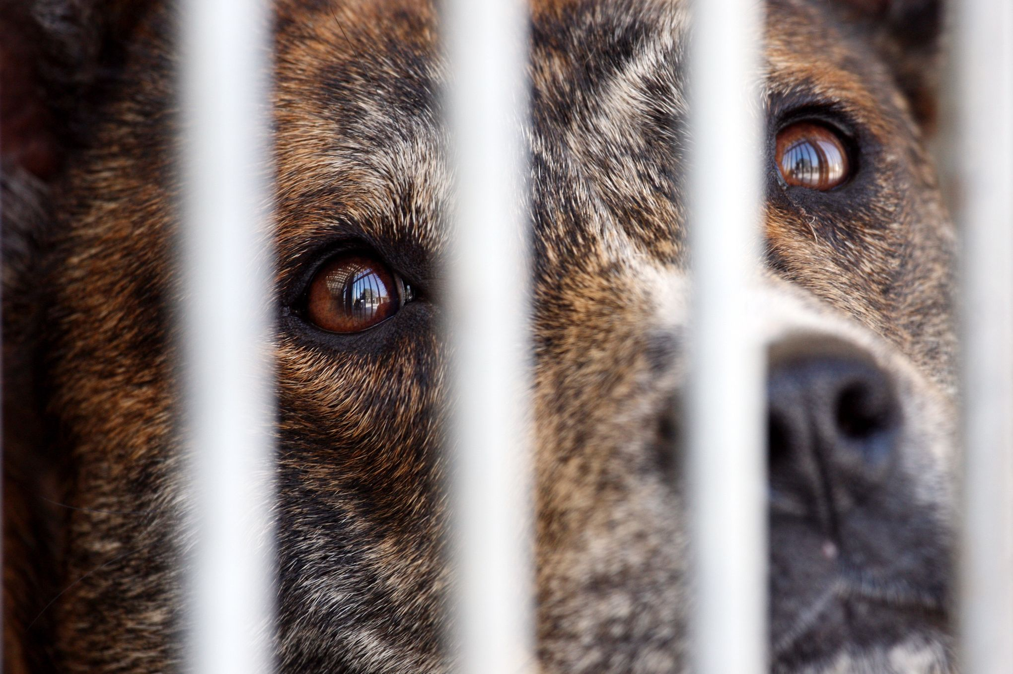 PETA dénonce le financement d expérimentations animales par l AFM-Téléthon f59f66ddee1