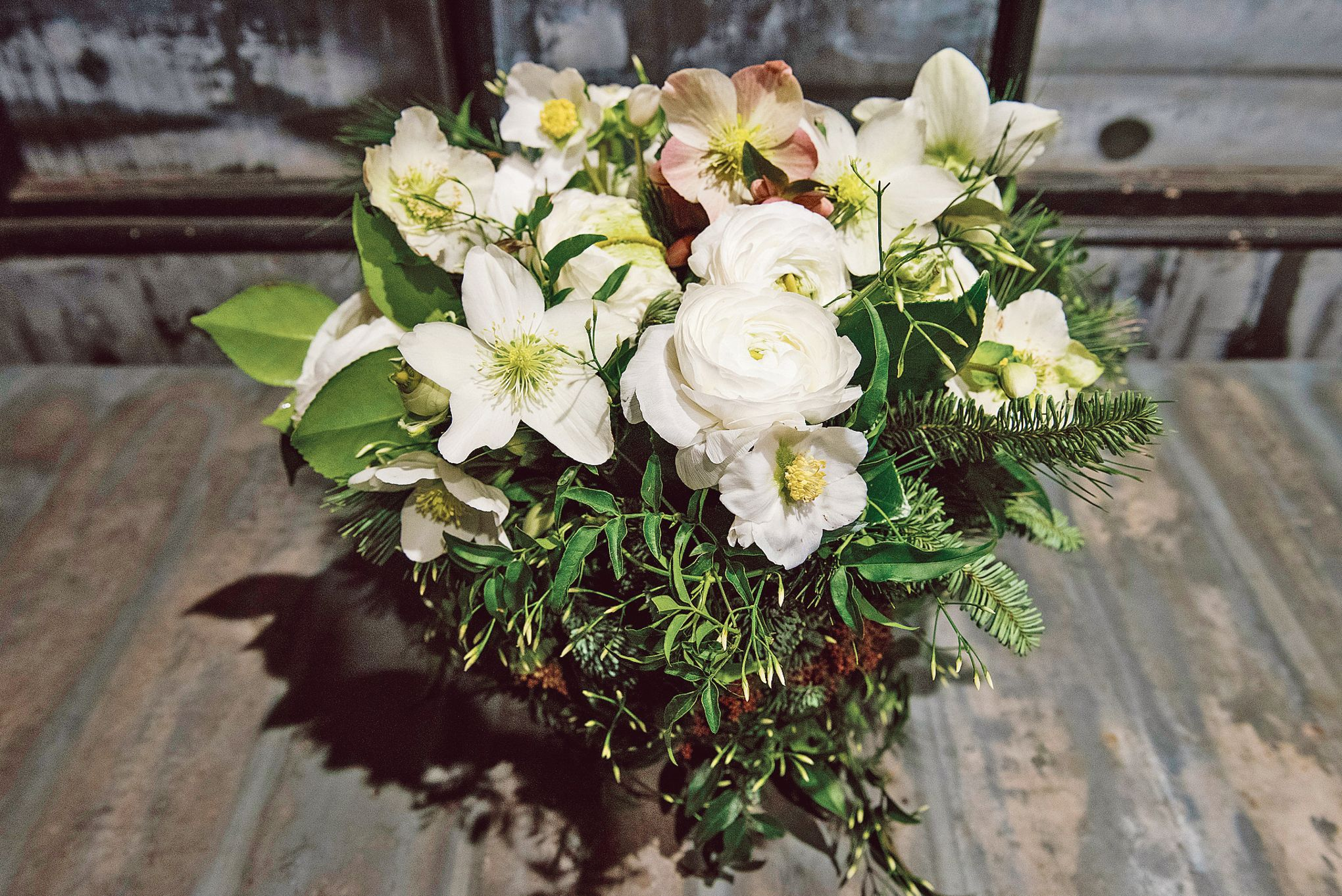 Hellebore Rose De Noel Entretien hellébore, la sublime rose de noël qui enchante l'hiver