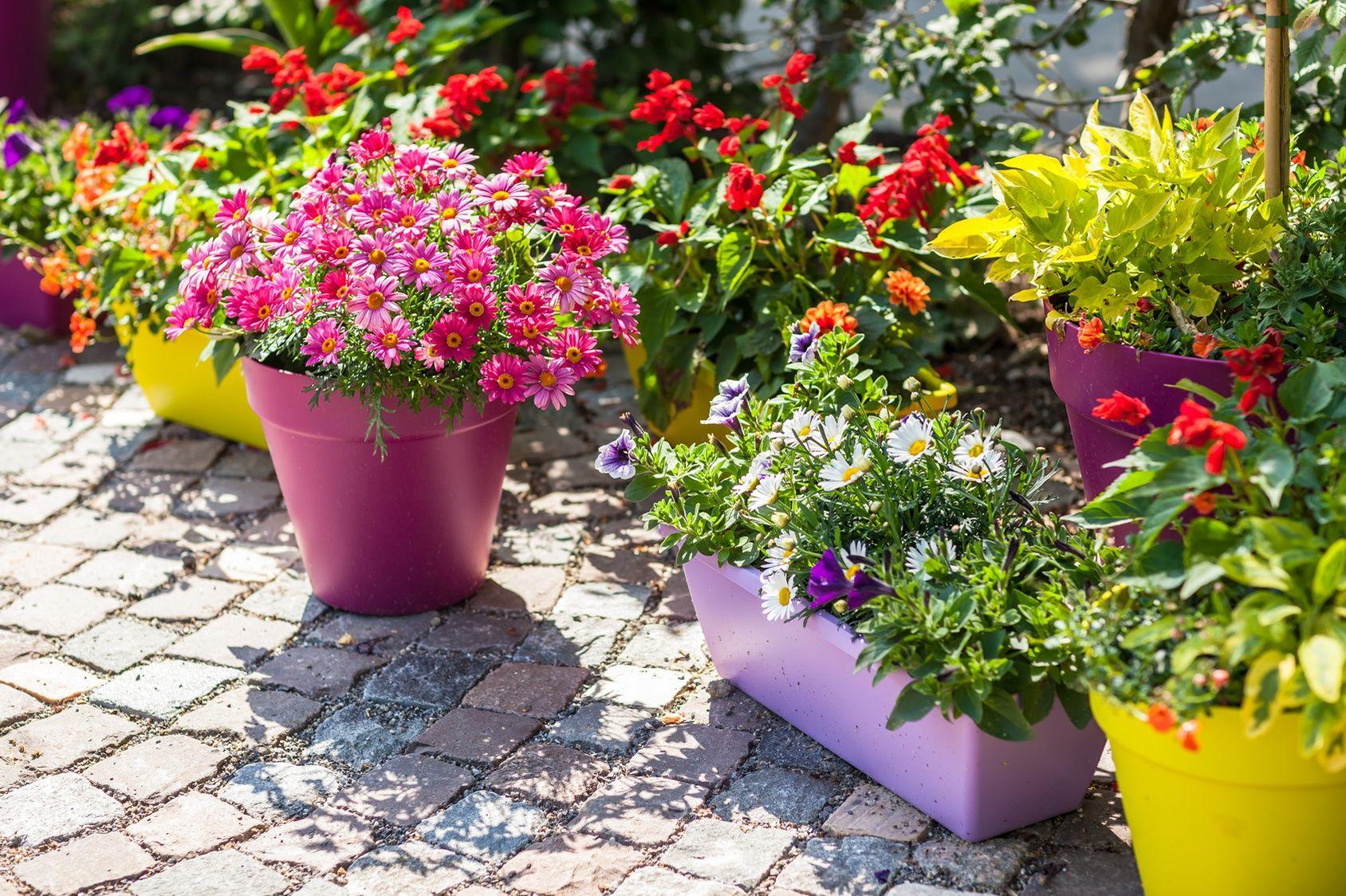 Planter Un Lilas En Pot balcon, terrasse, cour pavée: des ambiances pleins pots