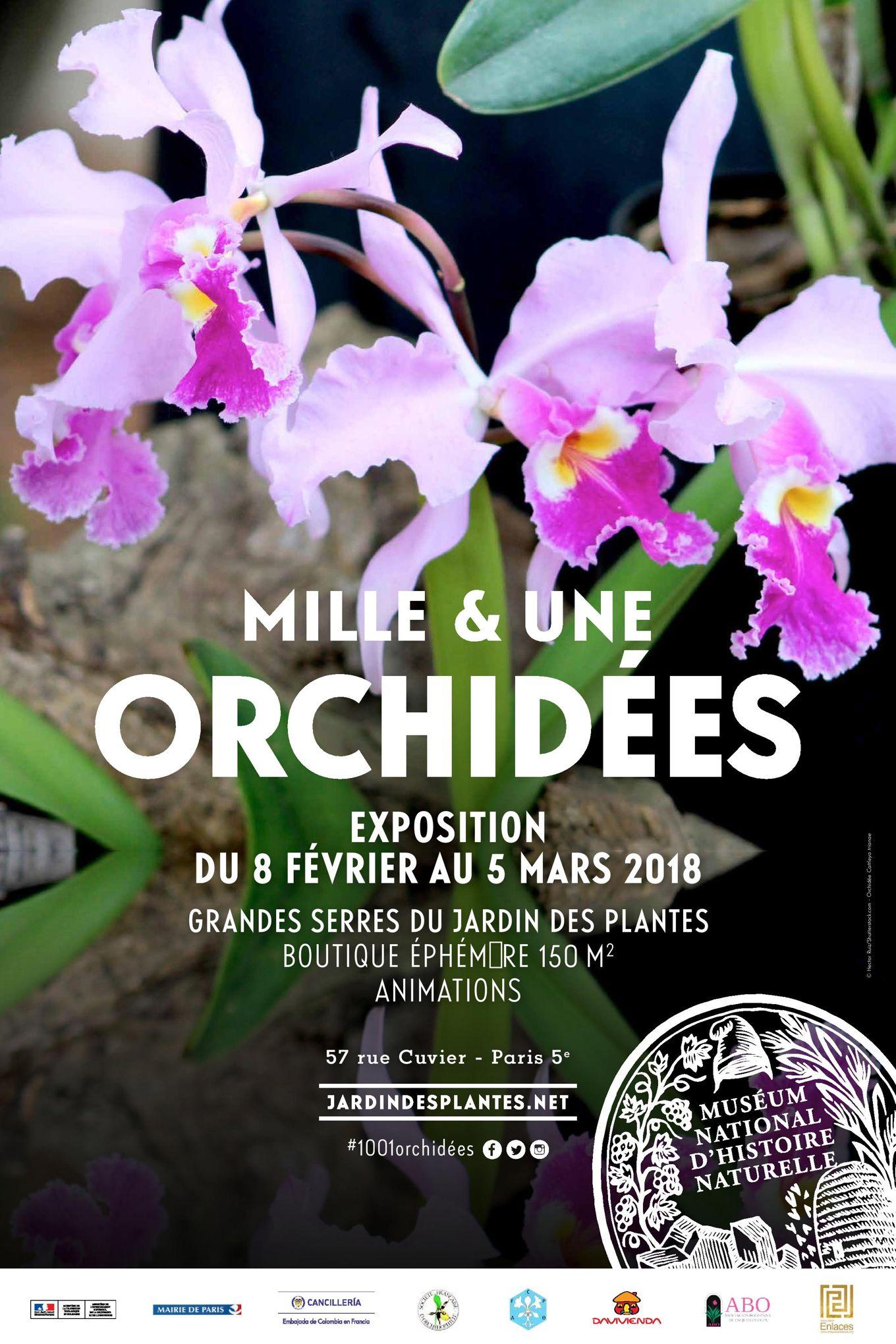 Exposition « Mille & une orchidées »: ne ratez pas la saison 6 !