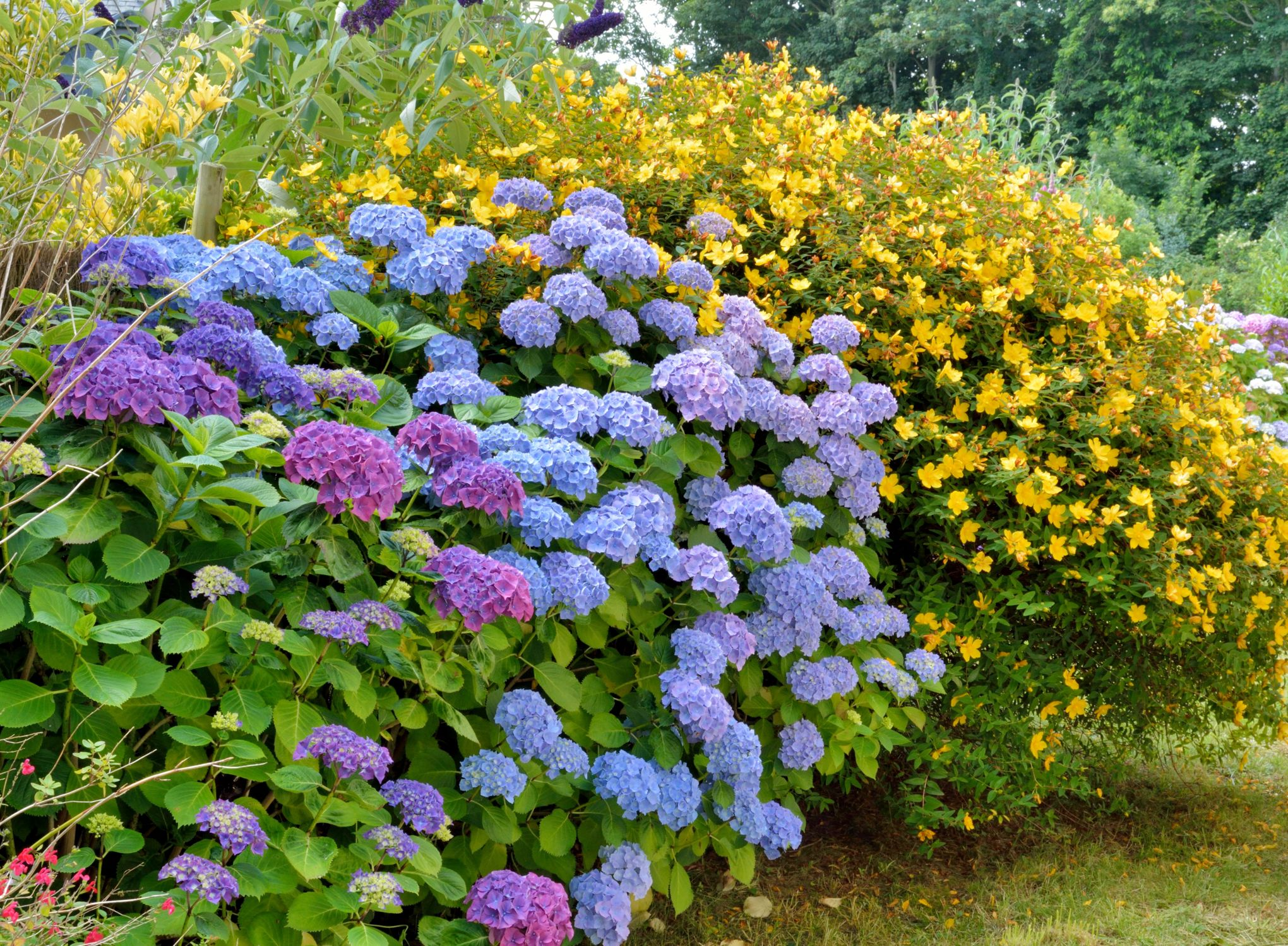 Bac Pour Arbuste De Jardin un bel écran végétal pour se protéger des regards