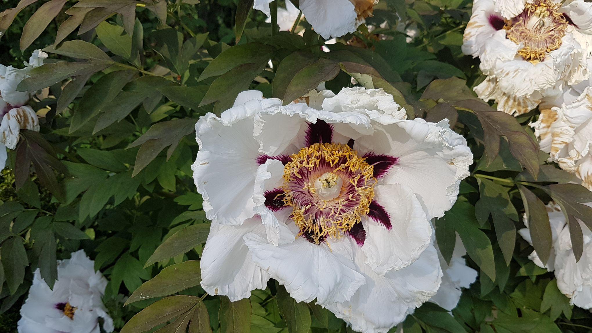 Quelles Fleurs Planter En Septembre quelles belles fleurs planter dans un sol calcaire?